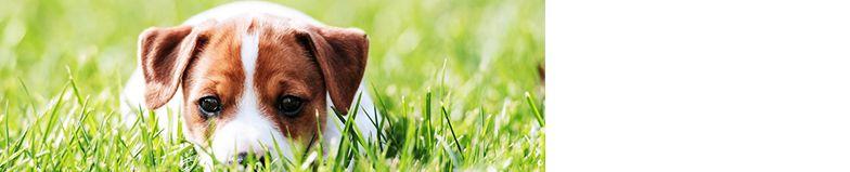 Akoma Hound Breezer Deluxe Dog House Kennel Ventilation